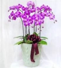 供應花卉租擺