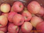 山东苹果价格红将军价格种植红星苹果供应