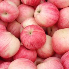 洛川红富士苹果直销