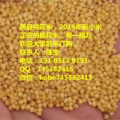 小米粮食价格 谷绿农品有机小米 杂粮黄小米